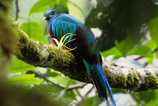 Panama Urlaub   Quetzal, Boquete