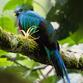 Panama Urlaub | Quetzal, Boquete