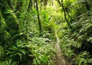Pfad durch den Dschungel im Darien