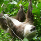 Panama Urlaub | Faultier