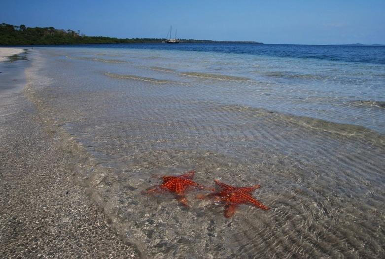 Panama Rundreise | Seesterne am Strand von Bocas del Toro