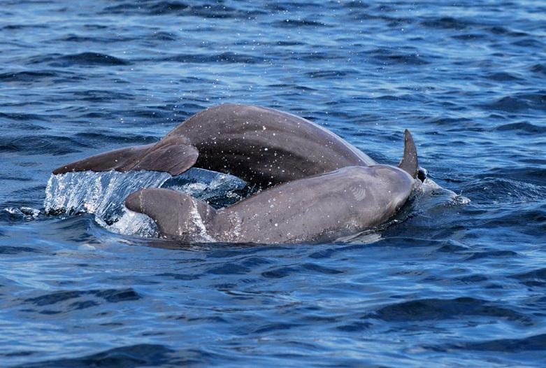 Panama Rundreise | Delfine, Bocas del Toro